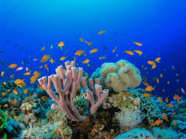 Red-Sea-Coral-Reef