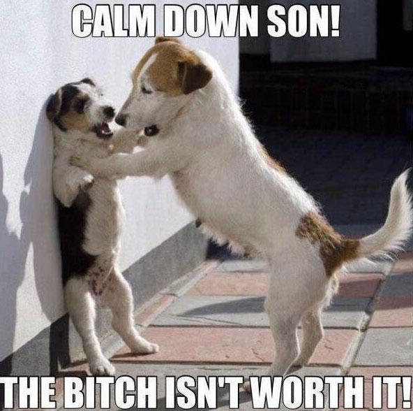 calm-down-dog