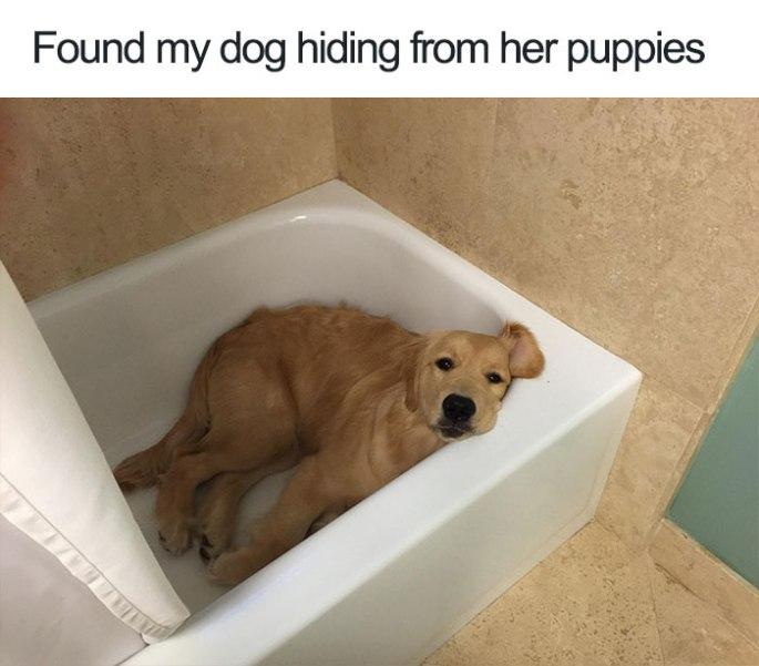 cute-wholesome-dog-puppy-memes-268-59097e2b67e44__700