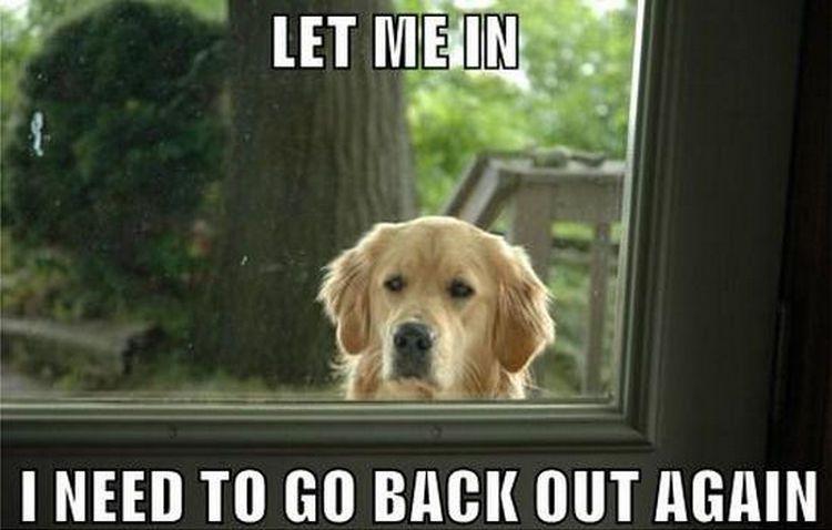 dog-meme-outside-571fa6443df78c564072aa8e