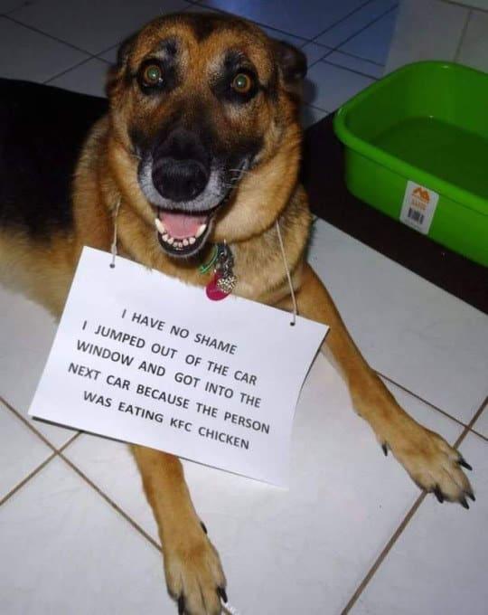 dog-memes4