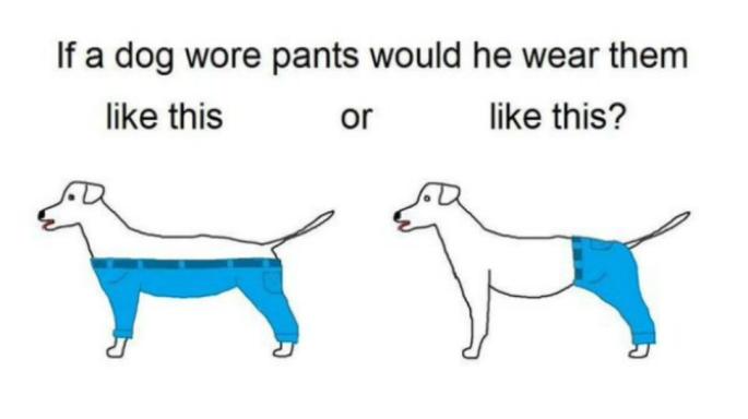 dog-pants-12302015