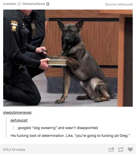 God-Fearing-Police-Dog-Is-Ready-To-Put-Criminals-Away-Forever-In-The-Name-Of-Justice