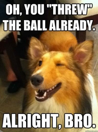 Implying-Gotcha-Dog-meme-5-e1341010387124