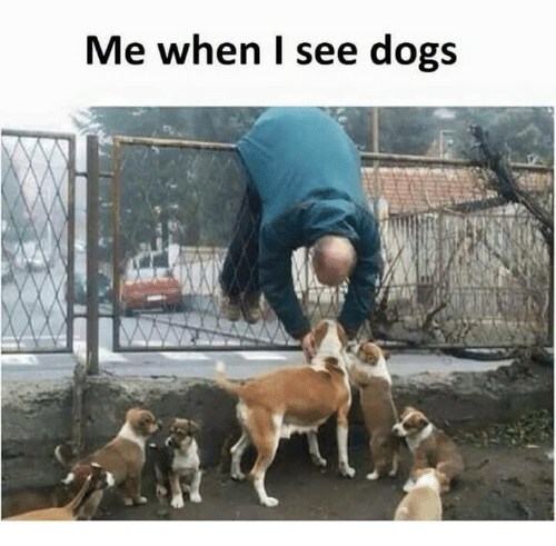 me-when-i-see-dogs-6303543