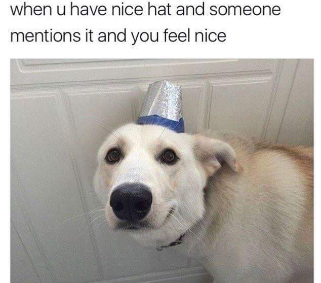 nice-hat-meme-dog-mentions-it-feel-nice-1487239195H