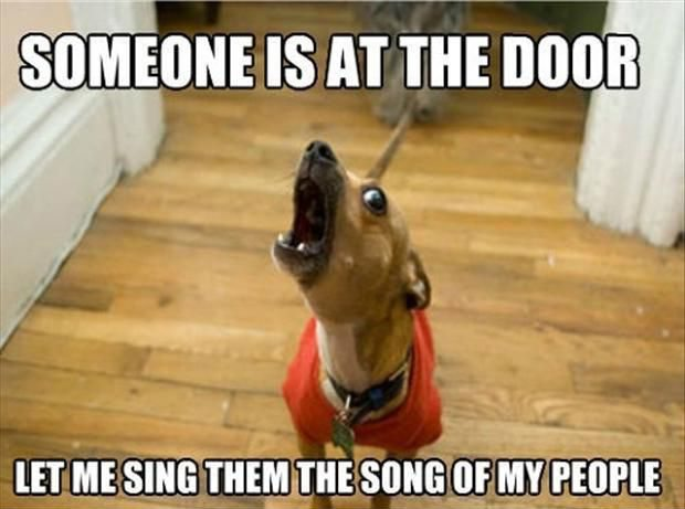 someone-is-at-the-door-let-me-sing-the-song-of-my-people-funny-dog-memes