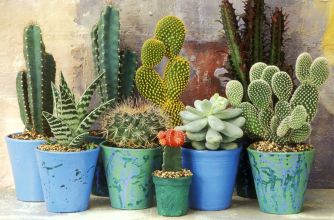 mixed-display-of-cacti-and-succulents-1523884208